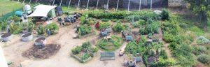 Bird's eye view of Pentridge Community Garden