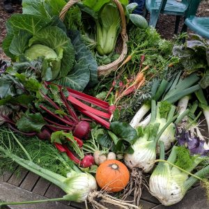 Winter vegetables at Pentridge